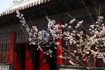 Spring views of Three Confucian Sites
