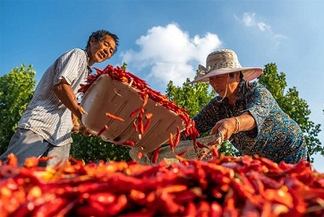 Shandong welcomes a rich harvest of vegetables in autumn