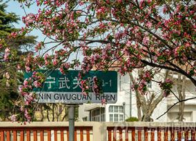Stunning crabapple flowers dazzle Qingdao
