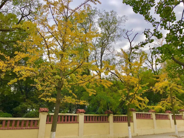 Badaguan Scenic Area boasts beautiful autumn views