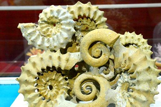 Qingdao Shell Museum