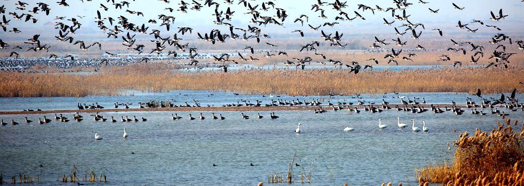 Shandong makes progress in wetland preservation
