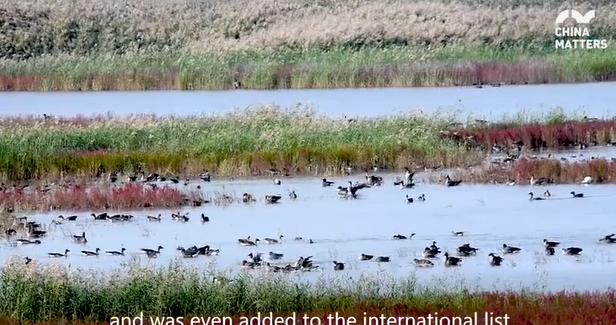 Beidagang wetland:Tianjin's largest wetland nature reserve