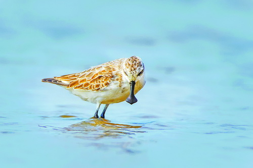 小鸟4.jpg