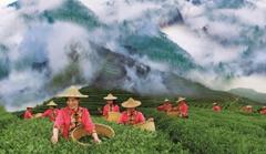 Fujian focuses on high-quality development