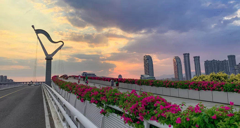 In pics: Blooming bougainvillea celebrating National Day