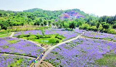 Xiang'an brings in tourism revenue of 168m yuan during National Day holiday