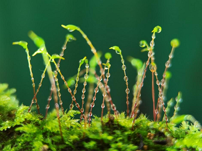 Yunnan University shines in ecological civilization photography competition
